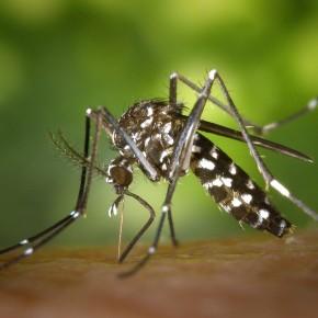 Virus zika: l'Outre-mer menacée? Gros plan sur La Réunion